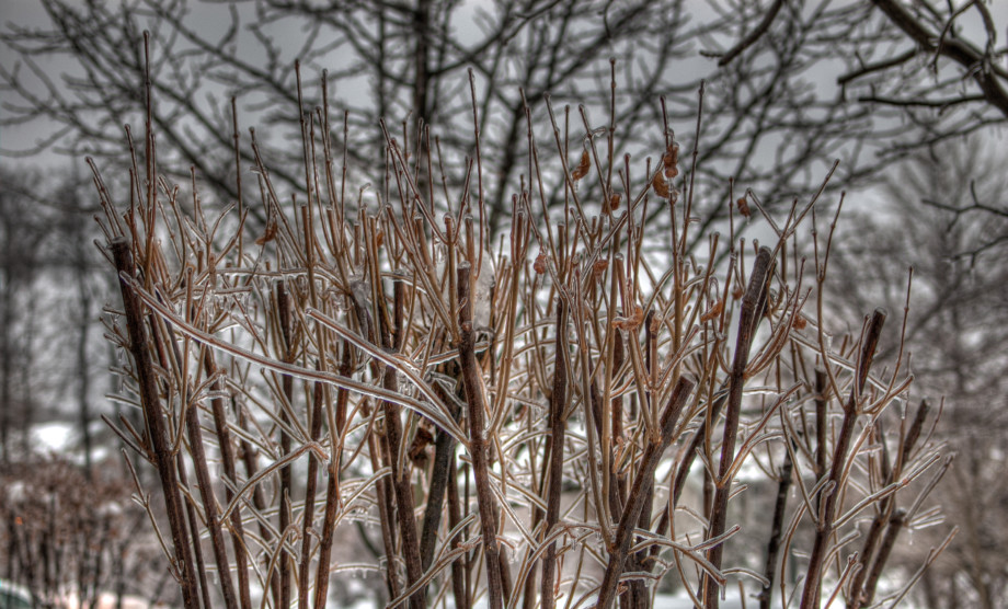 February 2, 2011 : Treecicles and shrubcicles, 20110202 DSC 5712 TONEMAPPED 920x556
