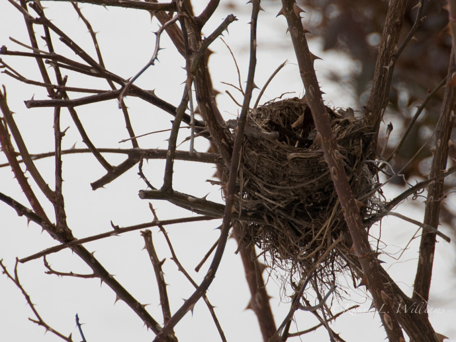 February 12, 2011 : Empty Nest 20110212 DSC 6093 920x691