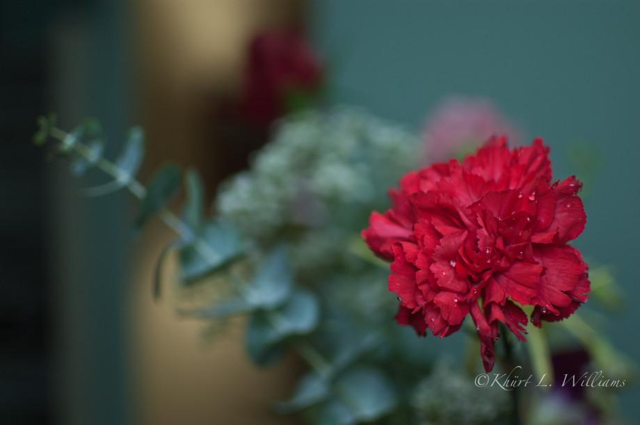 February 14, 2011 : Carnations last longer. 20110214 DSC 6125 920x611