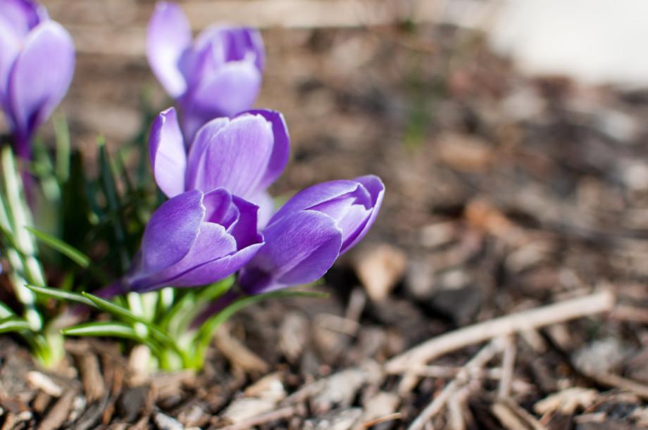 March 19, 2011 : More ... 20110319 DSC 6822 920x611
