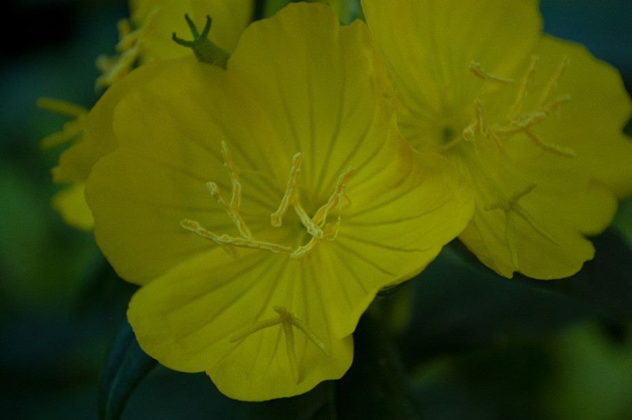 June 2nd, 2011   Yellow 20110602 NIKON D40 9268 920x611