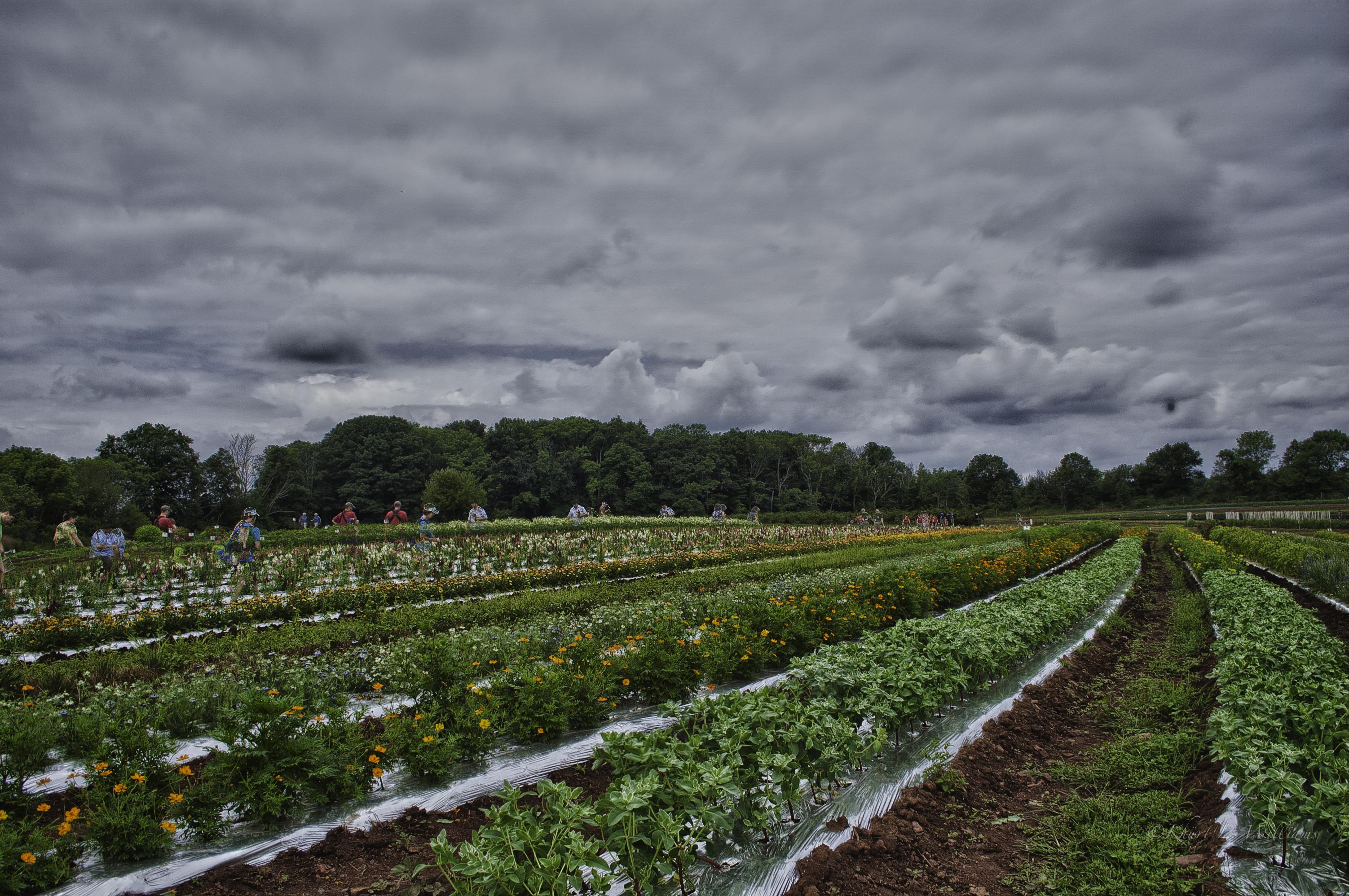 Week 30 : Honey Brook Organic Farm, 20120722 NIKON D40 9632 HDR