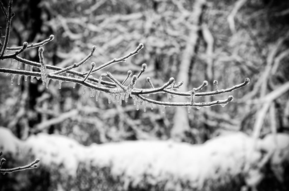Natures Chandelier NIKON D5100 20140205 68781
