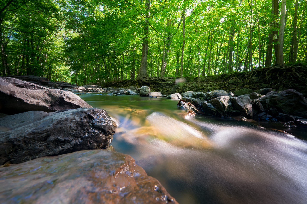 Fuji X T1 and Fuji 10 24mm f/4 R OIS at the Rock Brook X T1 20140526 7224 blog