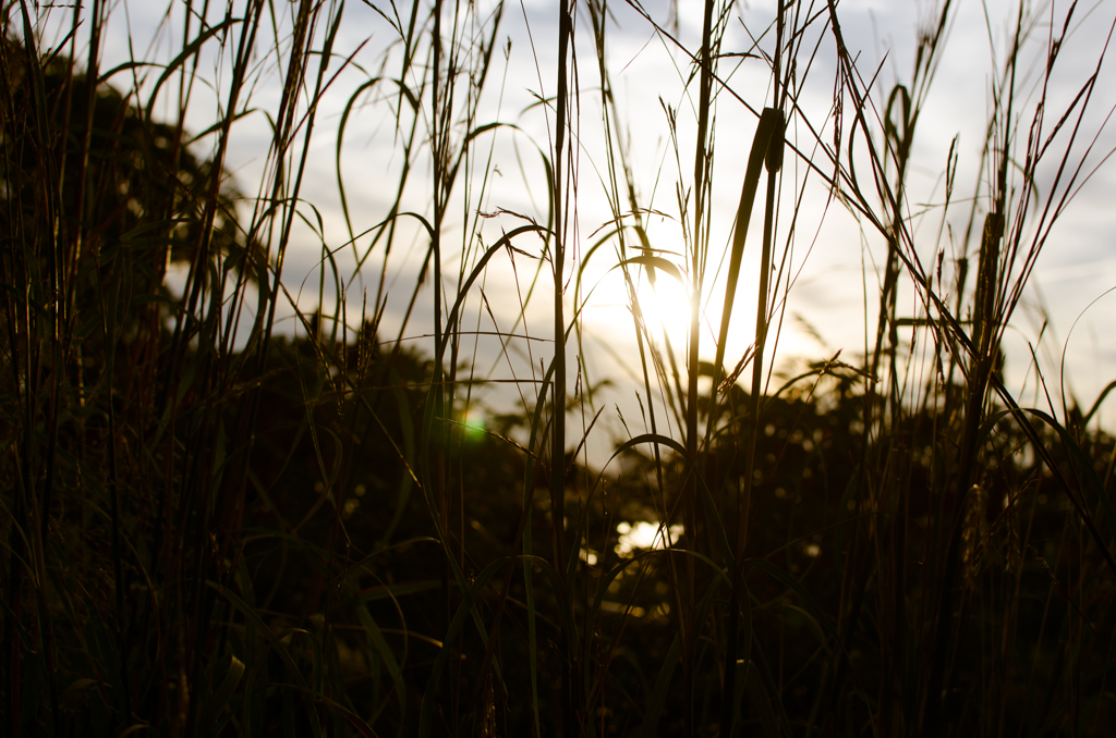 sunset against blades of grass