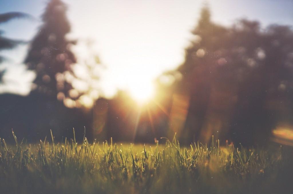 jakegivens sunset in the park