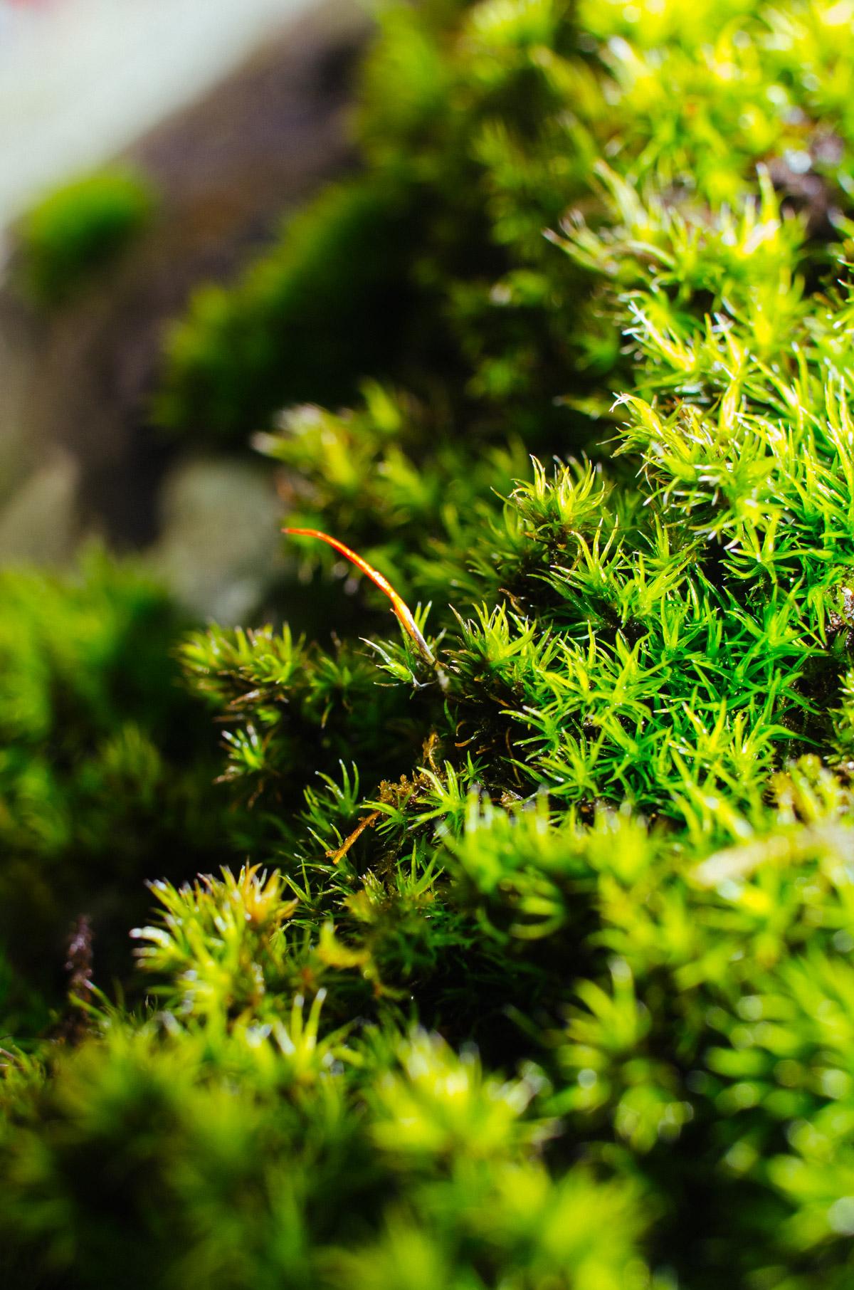 Souland Mountain Moss NIKON D5100 20160423 0809
