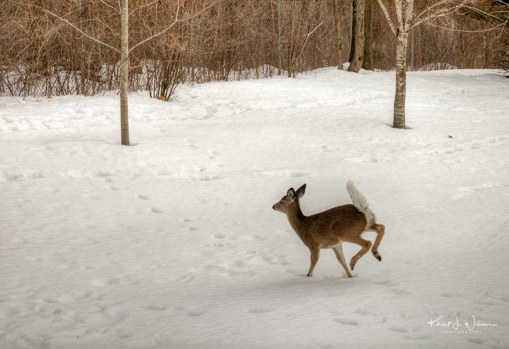 window, snow, storm, winter, backyard, deer