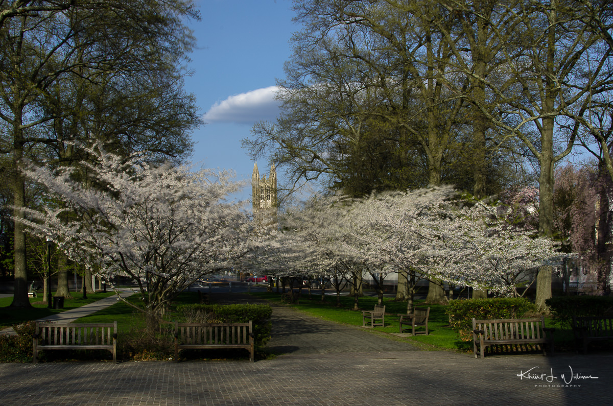Princeton, Monument, Spring