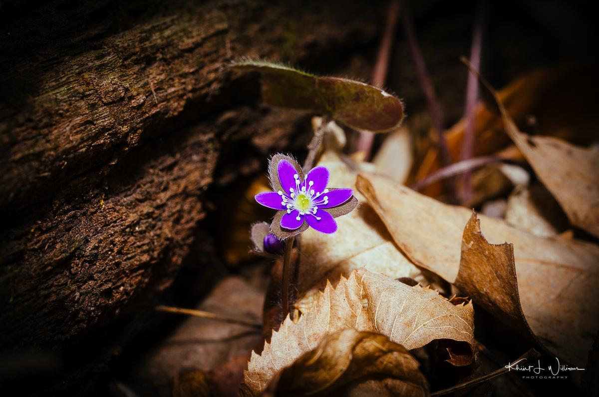 Spring Spring NIKON D5100 20150425 5968 1