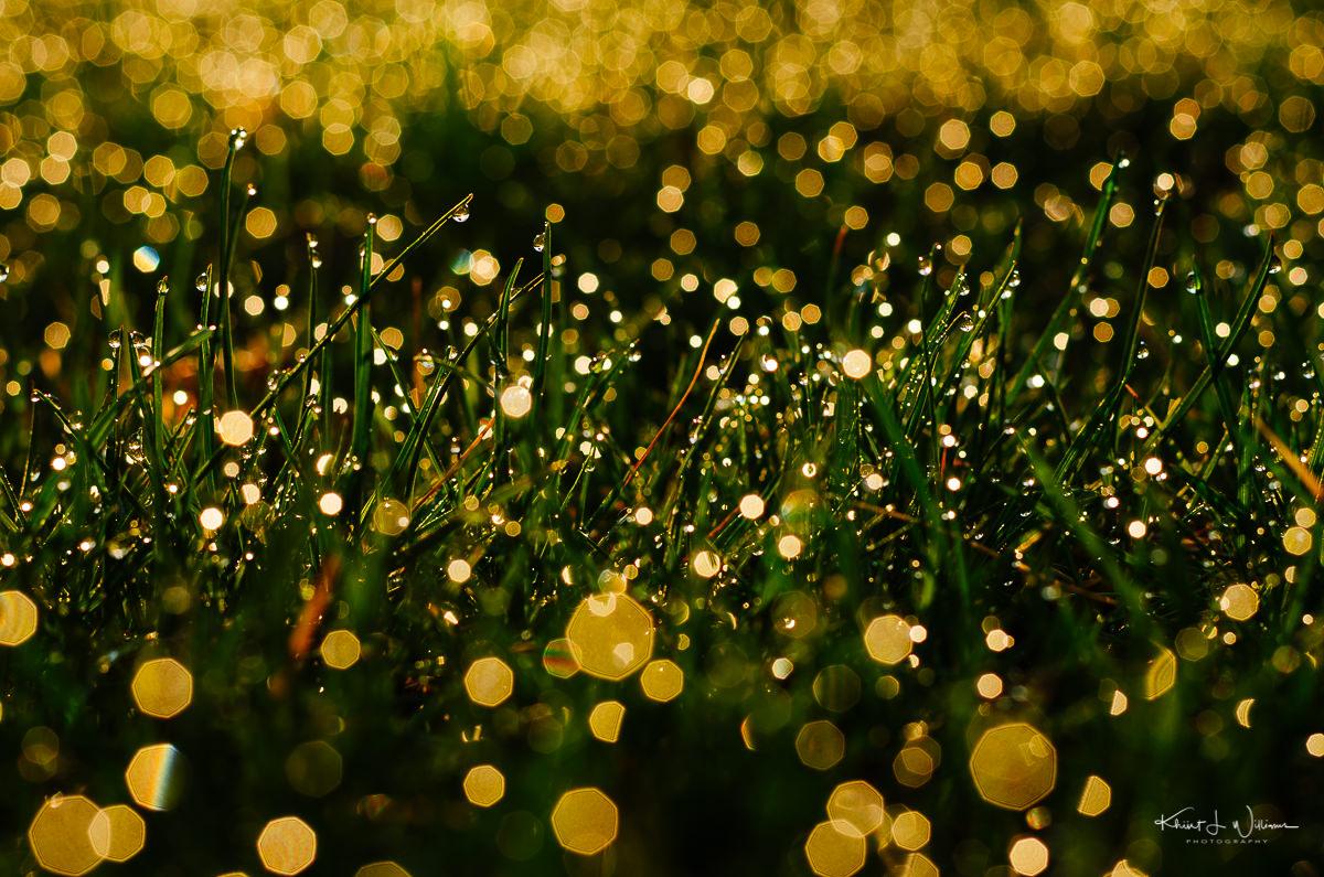 Wet grass NIKON D5100 20130411 013