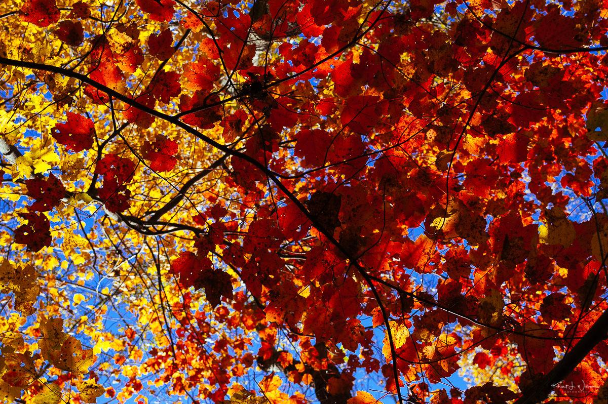 Leaves 20121020 NIKON D40 1101