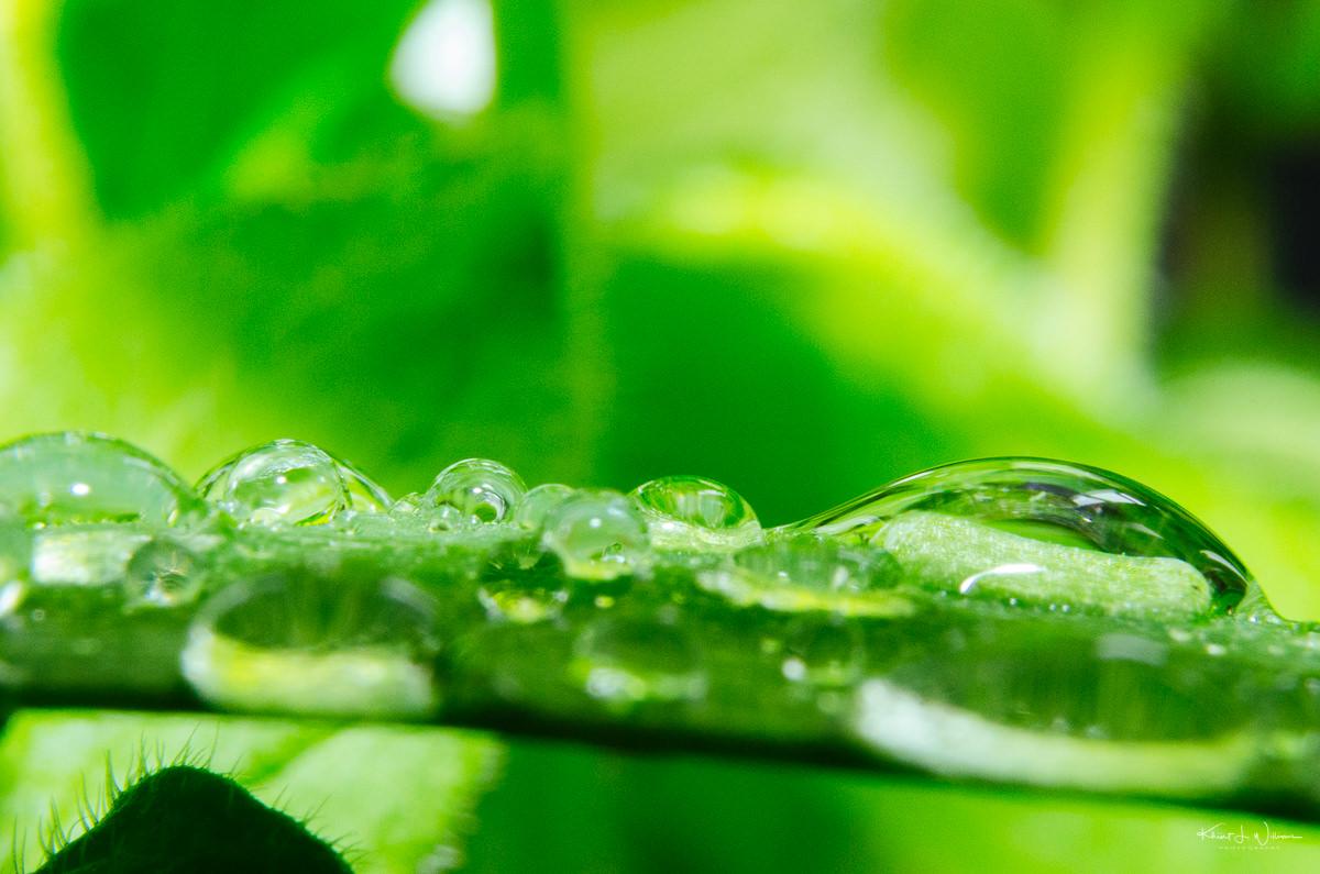 Water Drop on Leaf Macro NIKON D5100 20170506 0977 Edit