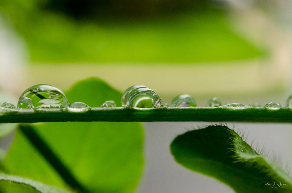 Water Drop on Leaf NIKON D5100 20170506 0963 Edit