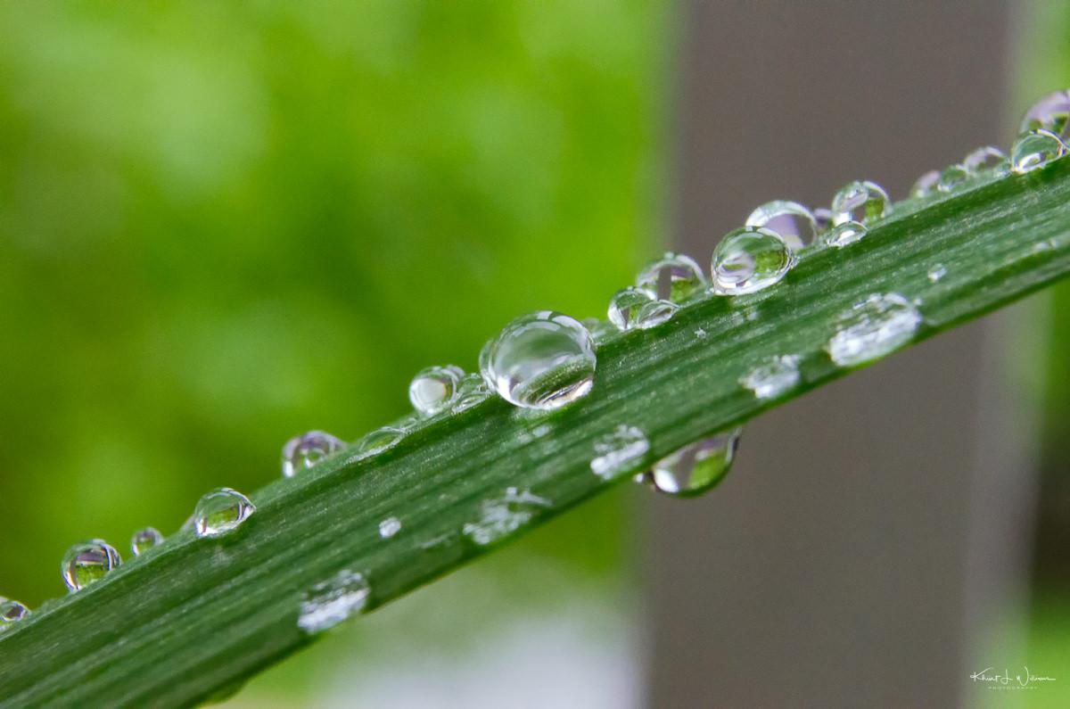 Water Drop on Leaf NIKON D5100 20170506 0969 Edit