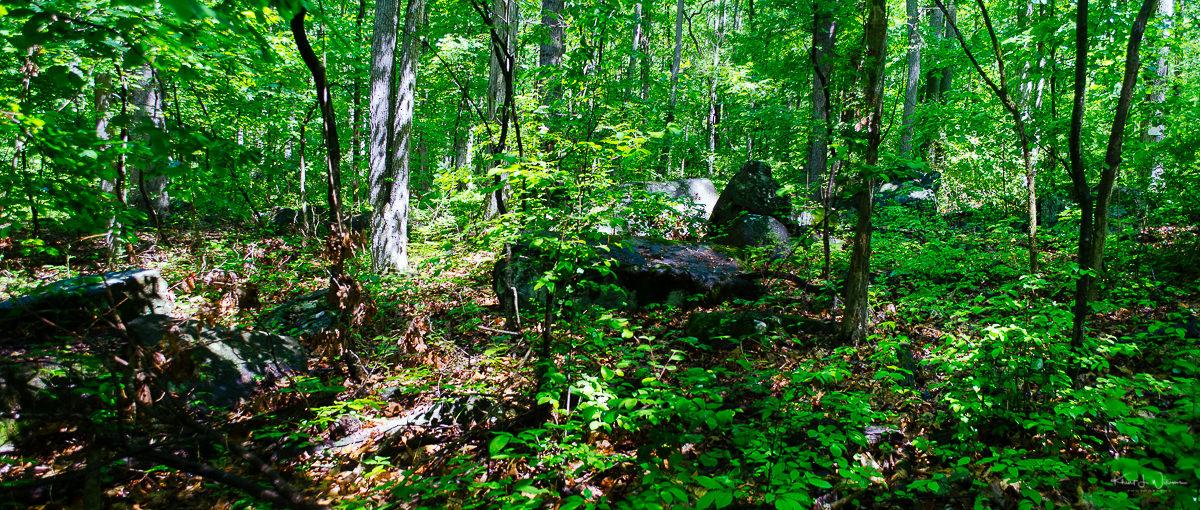 Autumn Hill Reserve NIKON D5100 20170603 3019 Edit