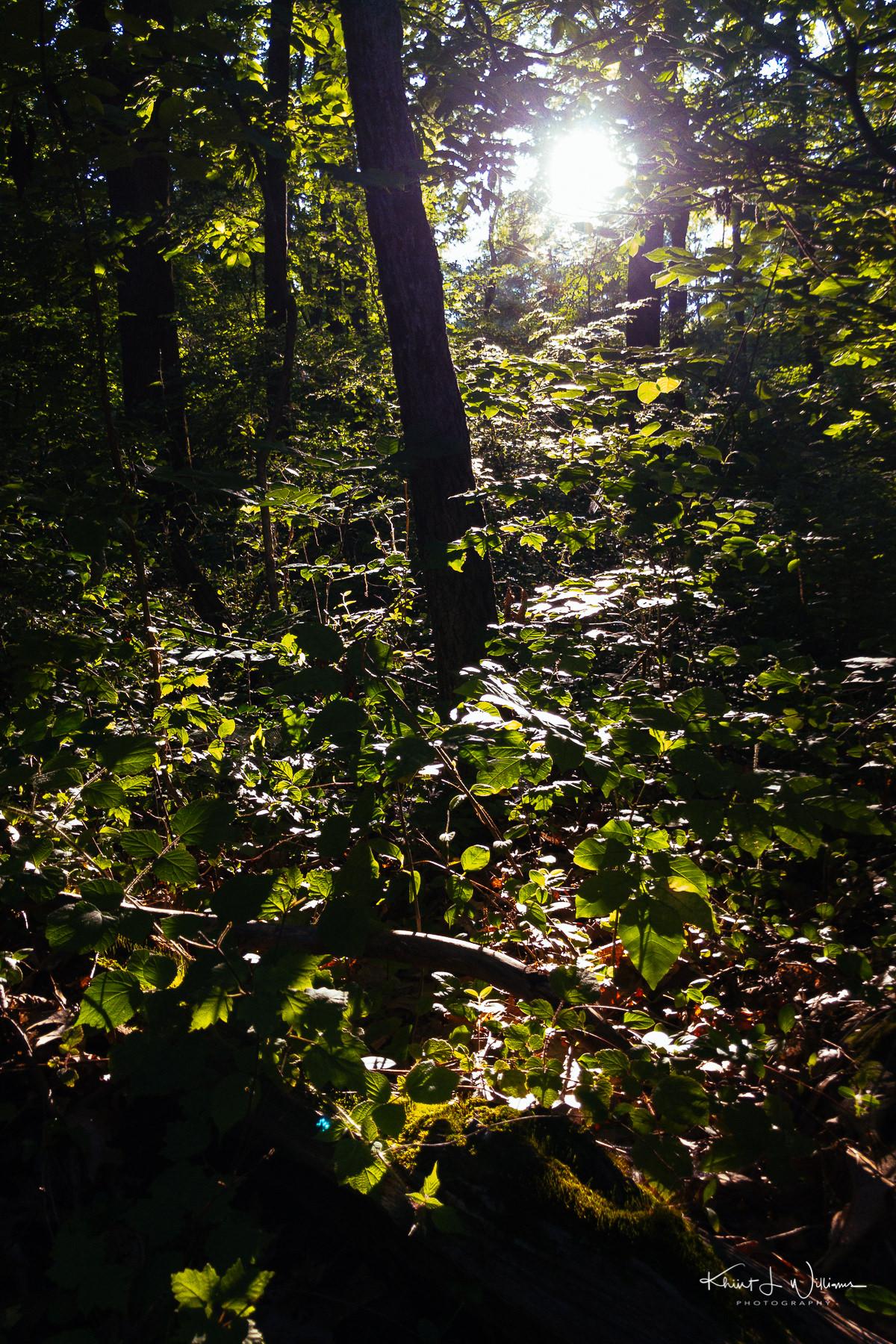 Woods APC 0276