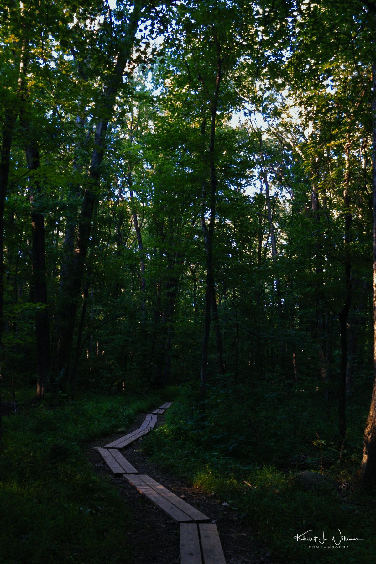 Woods APC 0279