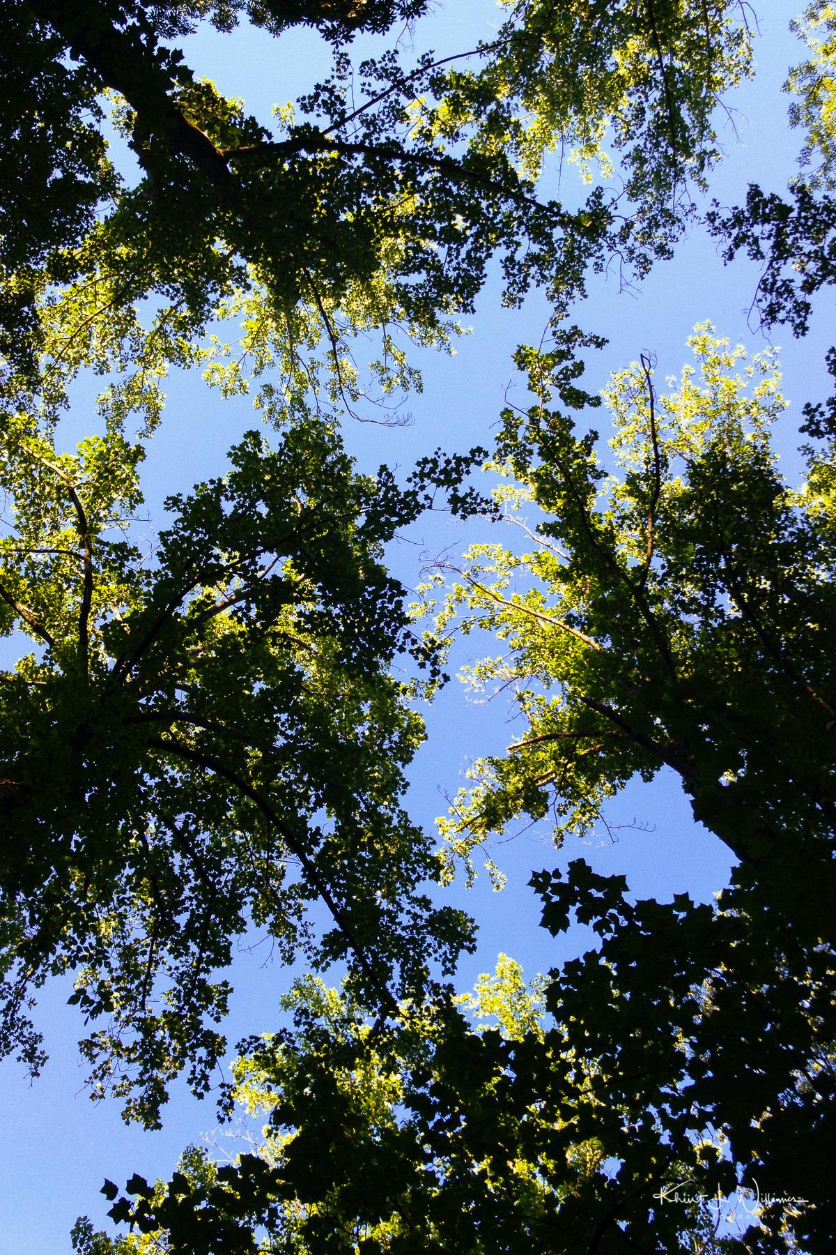Woods APC 0290