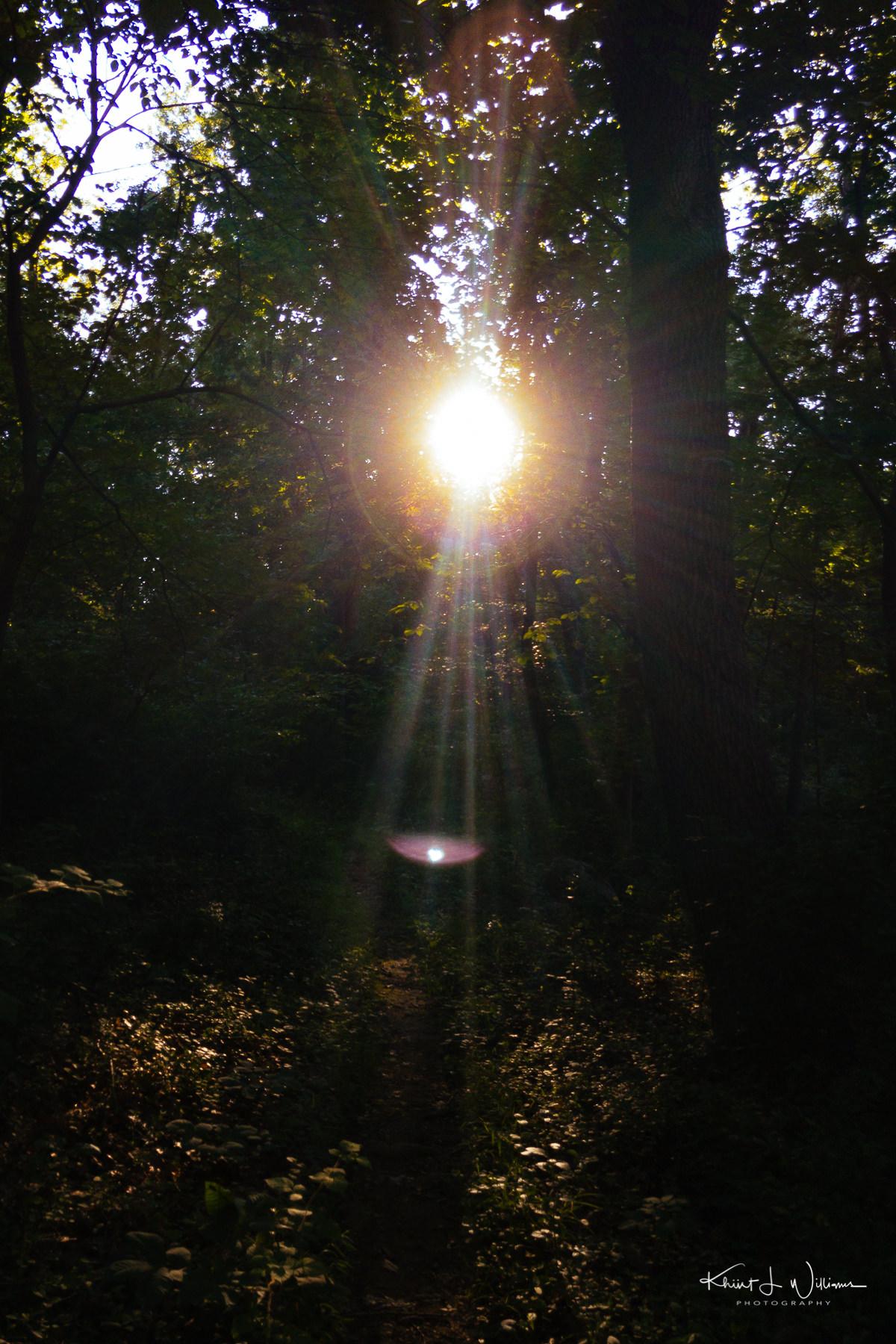 Woods APC 0299