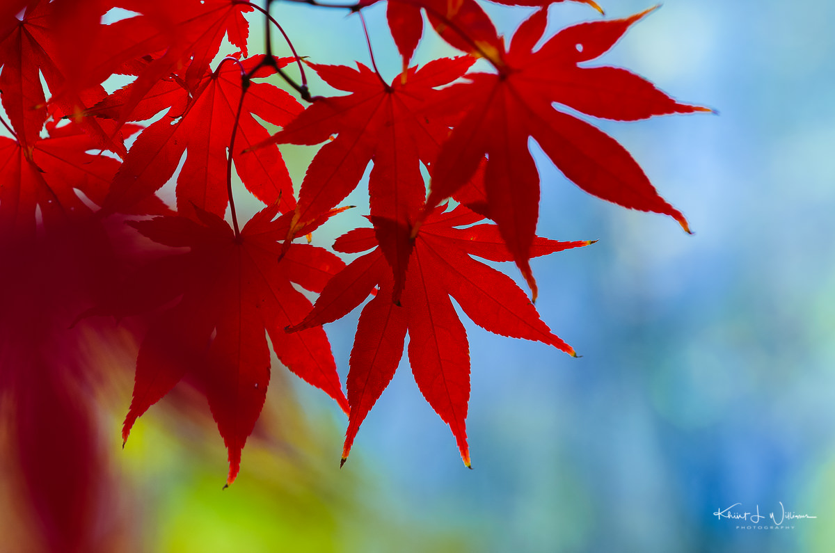 Park, Princeton, Leaves