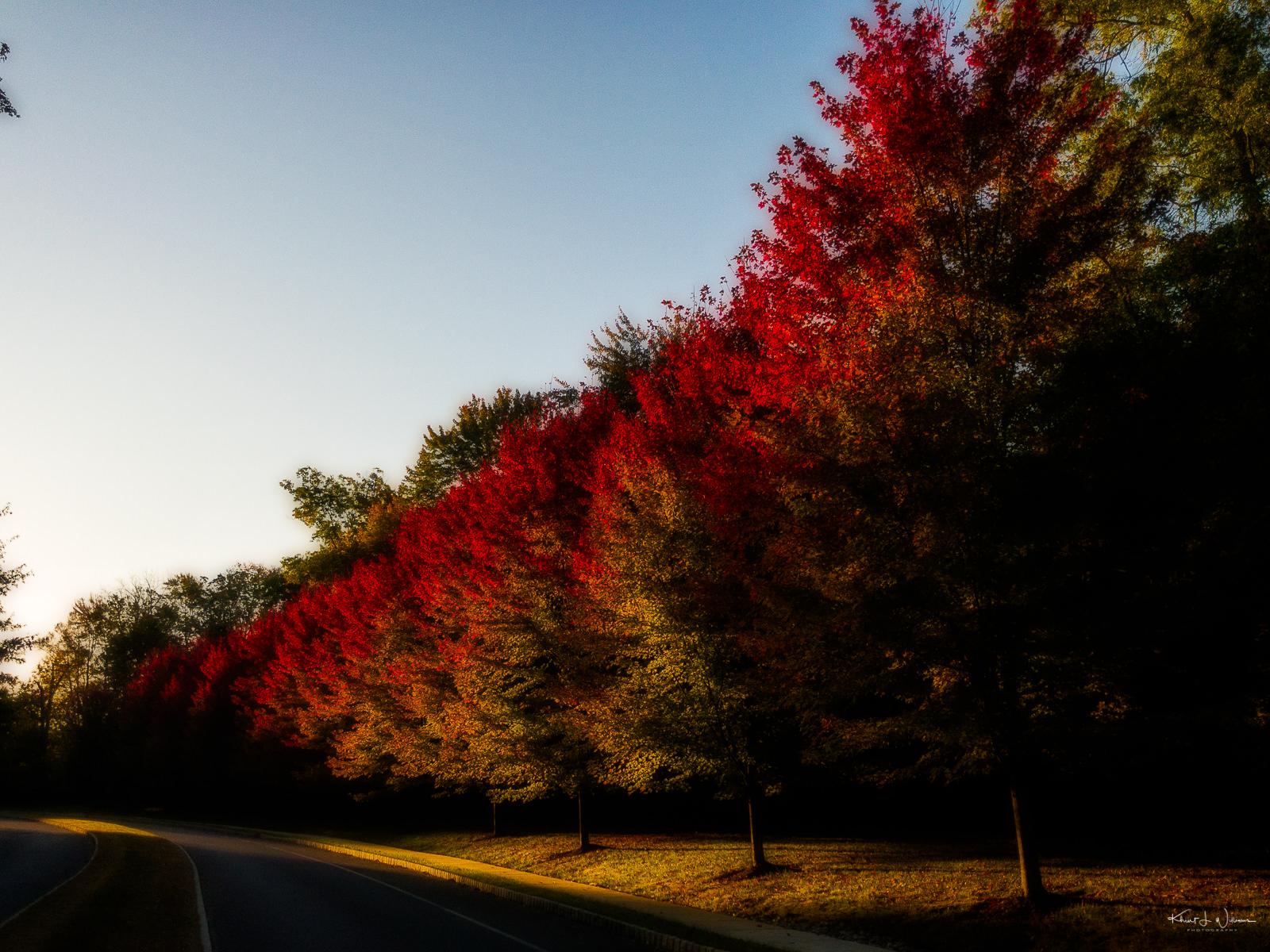 October Morning on Blue Spring Road APC 0581 Edit 1