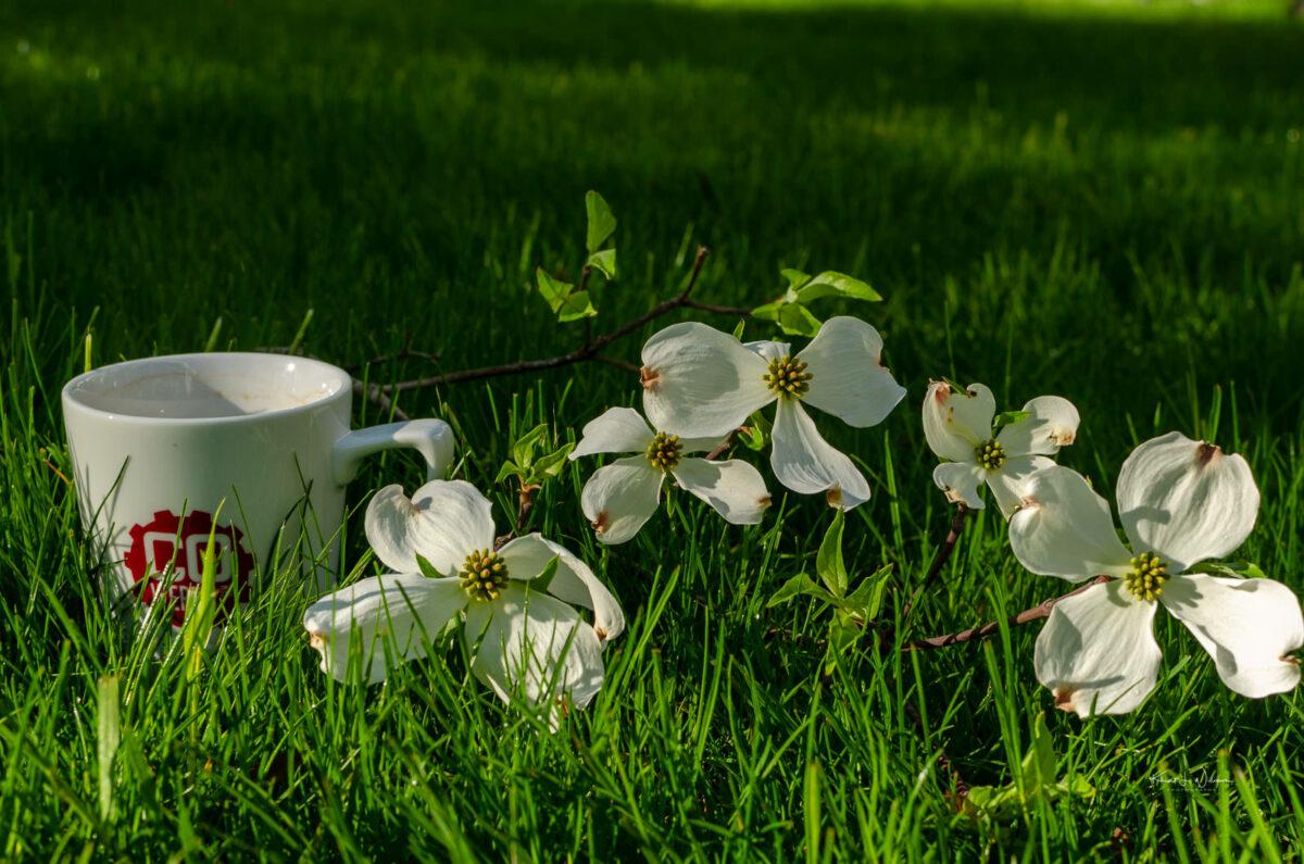 Coffee, Grass, Flowers