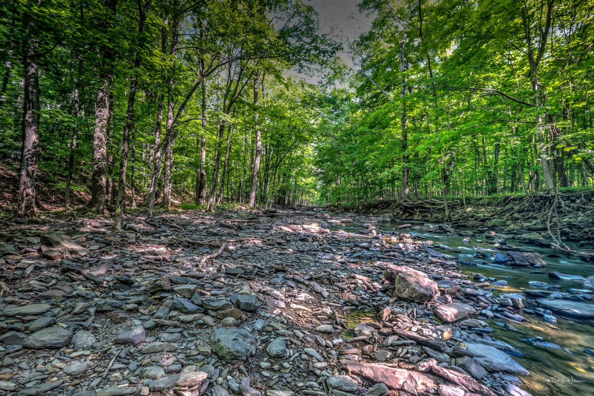 Rock Brook, Rocks, Forest, Trees