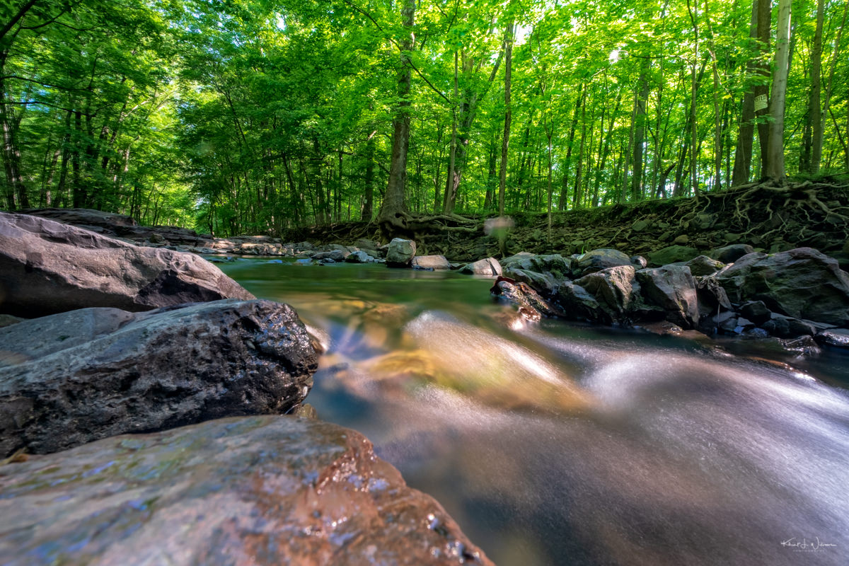 Rock Brook, Forest, Trees, Water, Rocks