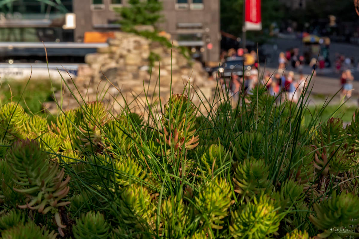By land and by water; a field trip to the lower Manhattan cityscape The Lower Manhattan Cityscape Canon EOS 5D Mark III 20180728 7230 Edit blog