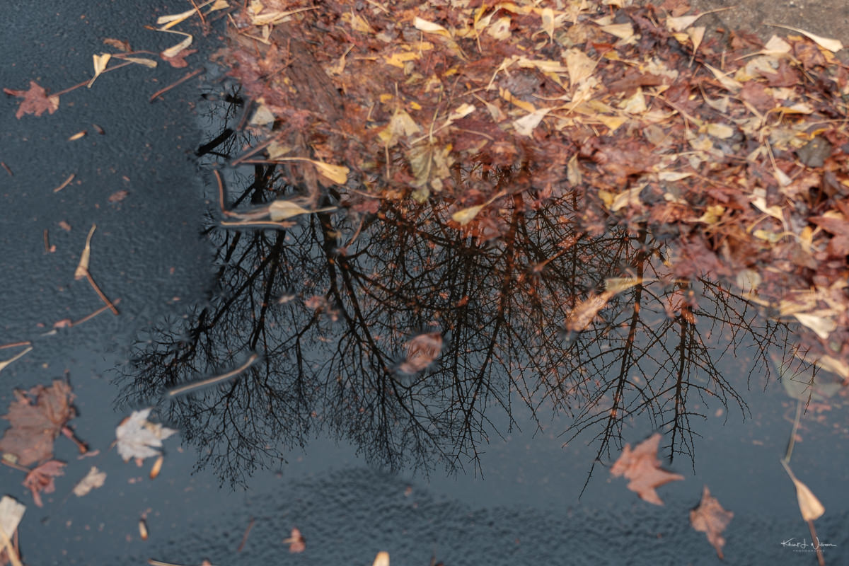 reflections, water