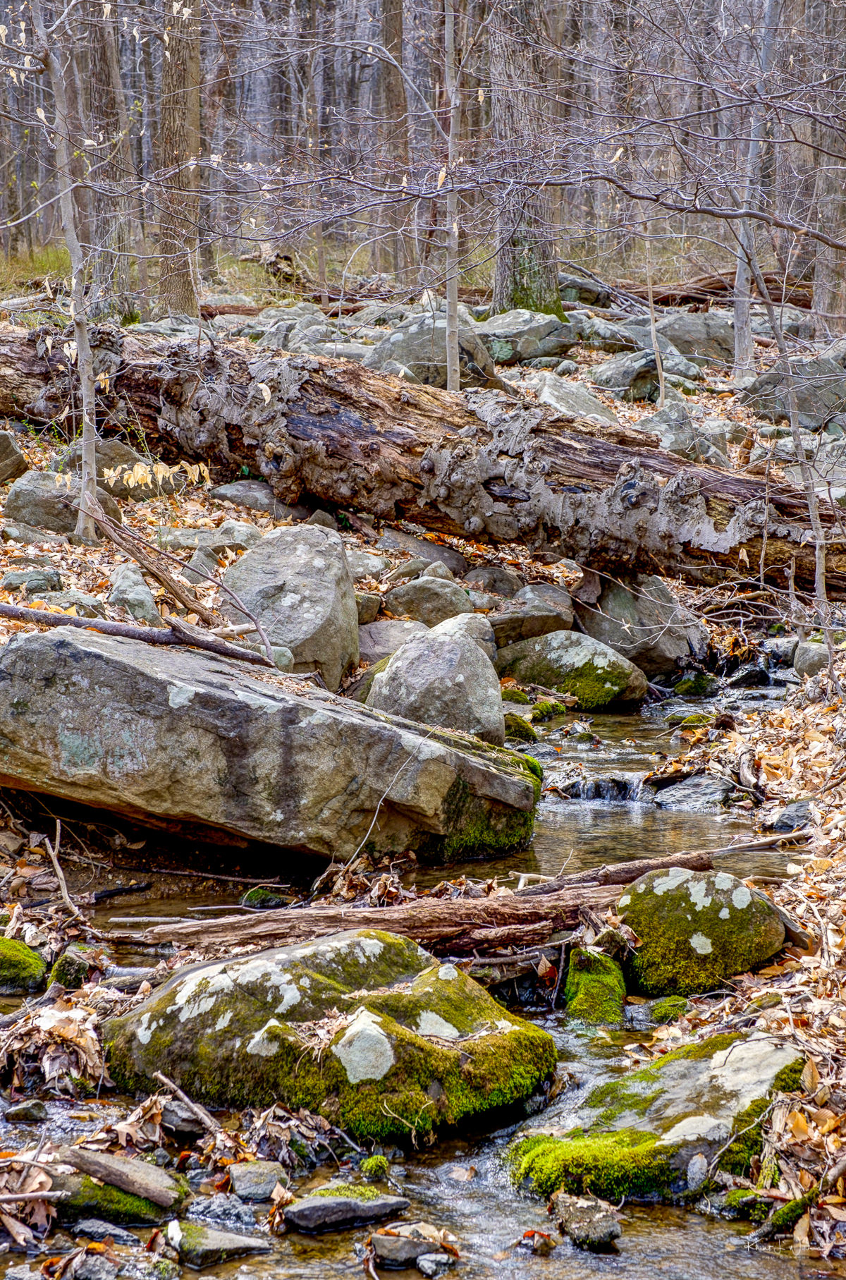 Rocks, Stream, Shrub