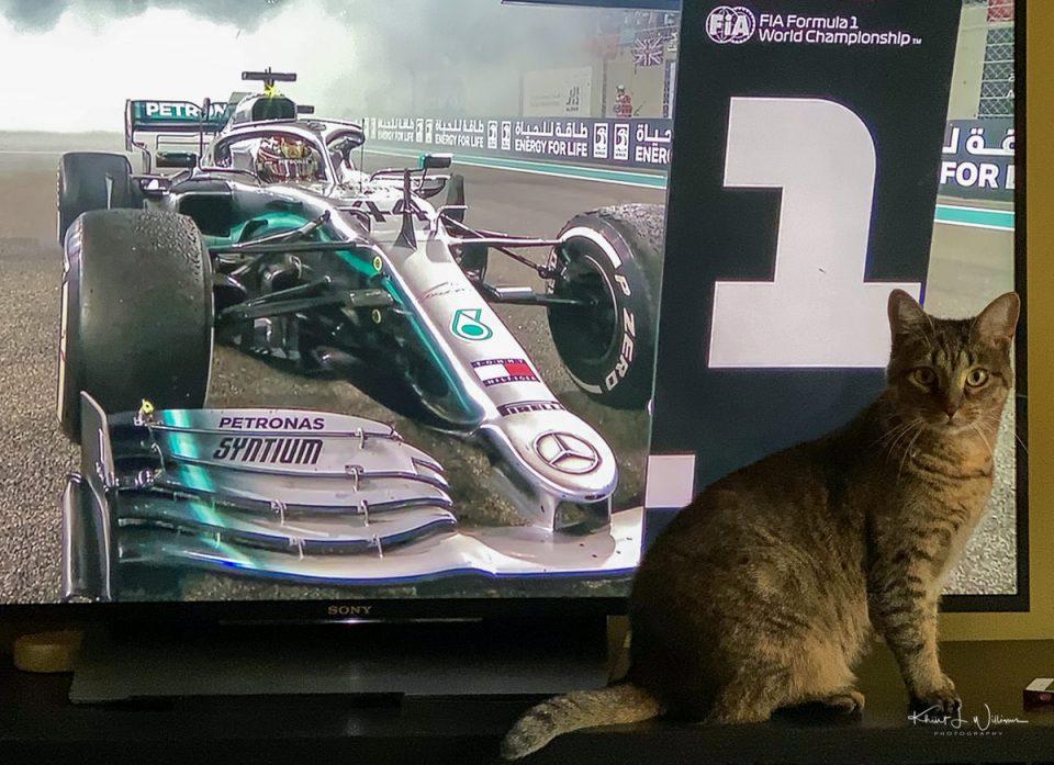 Cat, Television