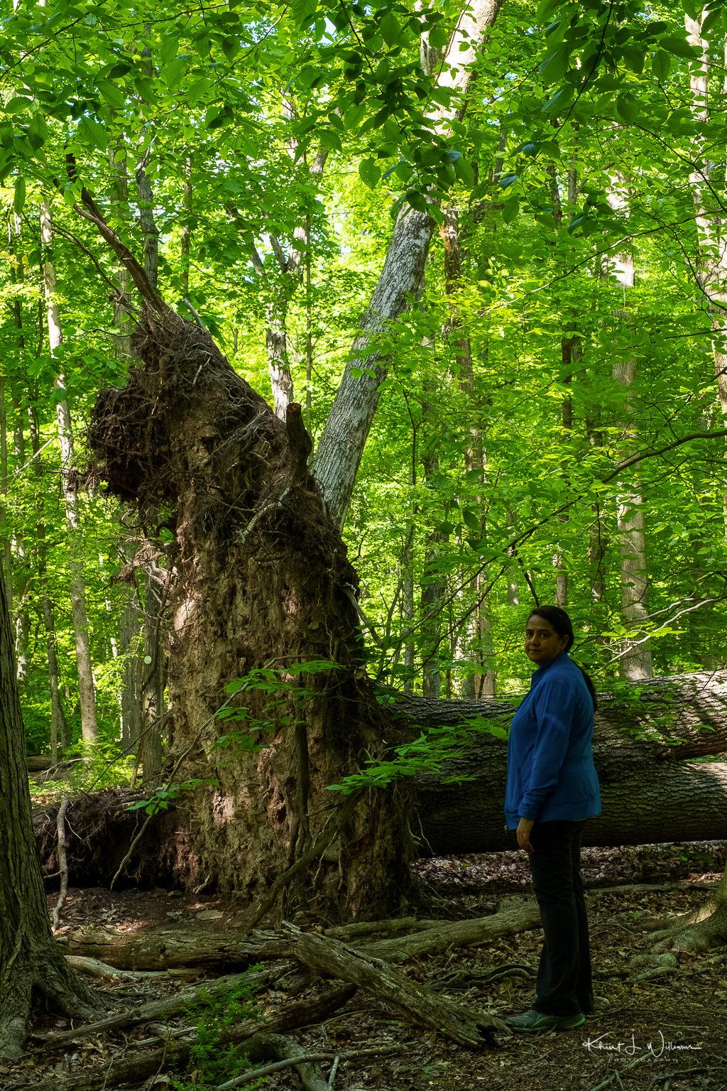 Bhavna standing next to a fallen tree stump