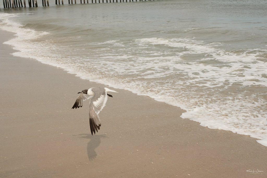 Seafull Beach Scene