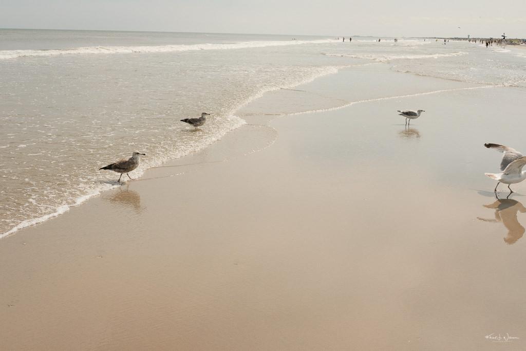 Seagulls Beach Scene