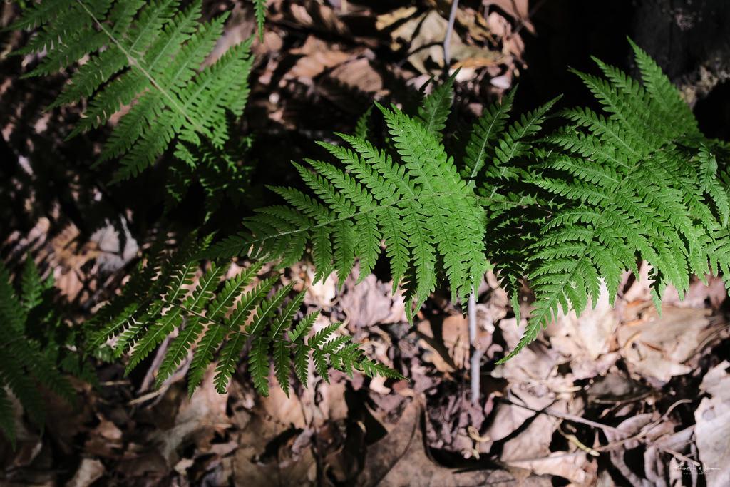 Sourlands Ecosystem Preserve