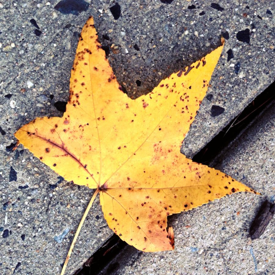 Leaf me alone wpid 5242c7b3b88bf4.97017168