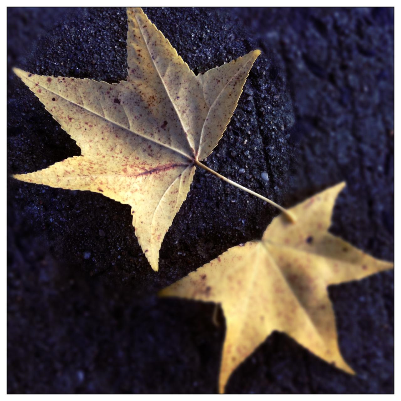 Leaves, wpid 5246dafadc06e2.88639279